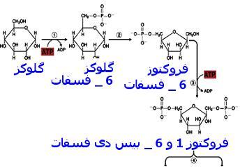 دانلود پاورپوینت روش های تولید آنزیمی و شیمیایی قند مایع گلوکزی