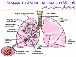 پاورپوینت تنفس هنگام ورزش